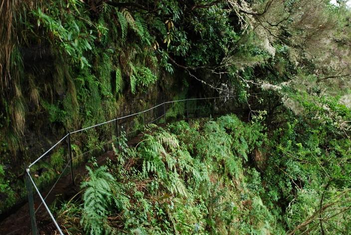 ścieżka wzdłuż lewady madera