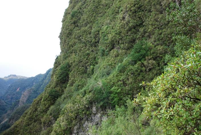 las pionowy