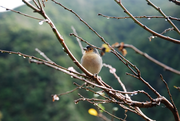 ptak na maderze
